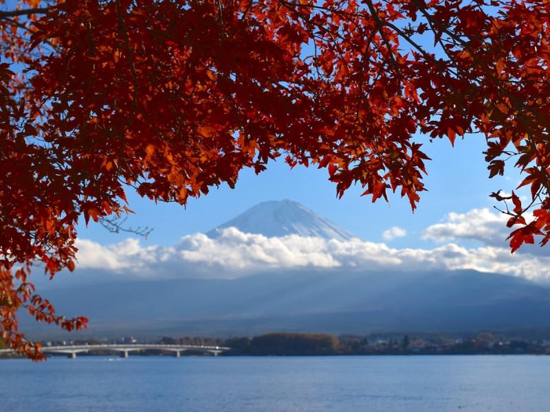 紅葉と富士山の絶景コラボを写真におさめよう!もみじ回廊で秋を満喫