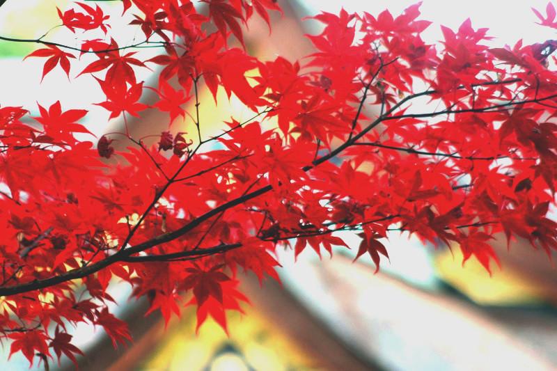 京都好きittaライターがおすすめする、京都の紅葉スポット7選!