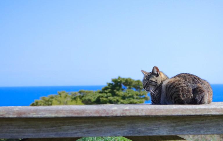 日常を離れてのんびりと。日本の「島旅」特集
