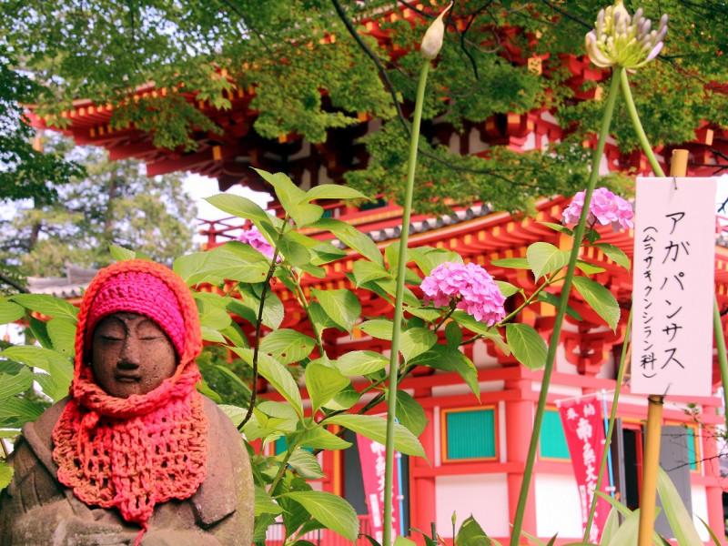 【東京】お寺とあじさいのコラボが美しい「高幡不動尊あじさいまつり」