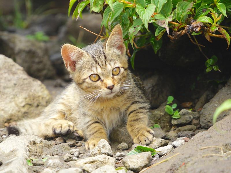 【金時山】東京からバスで日帰り登山! 自然と猫と温泉に癒される旅
