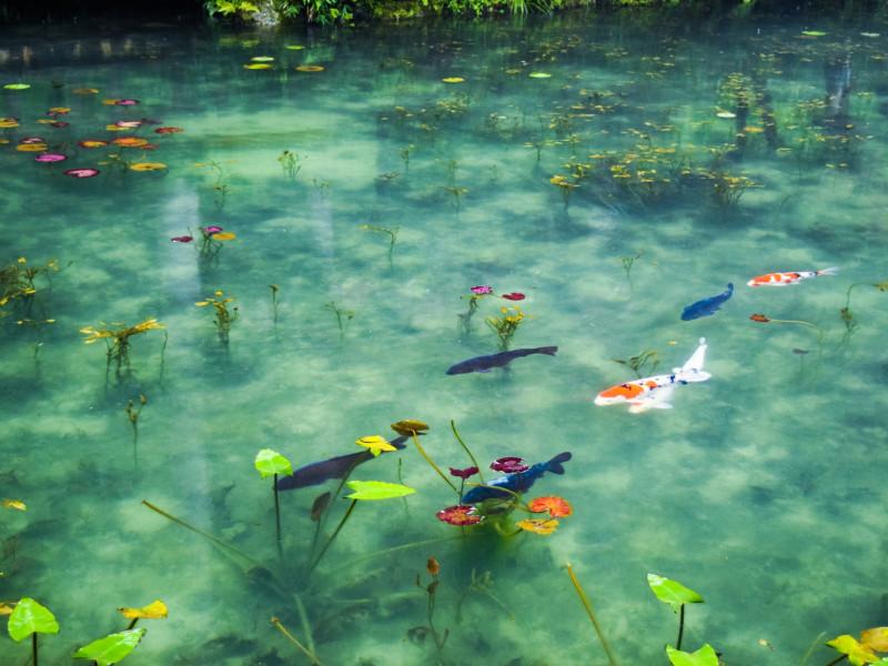【岐阜】絵画のような絶景スポット、「モネの池」に東京から日帰りで行ってきた!