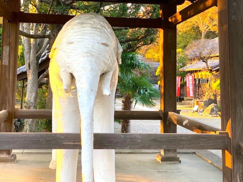 【埼玉】白いゾウがいる変わったお寺!アニメの聖地でもある「観音寺」に行ってきた