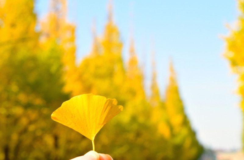 都心の秋の風物詩! 屋台グルメも楽しめる「神宮外苑いちょう祭り」開催中