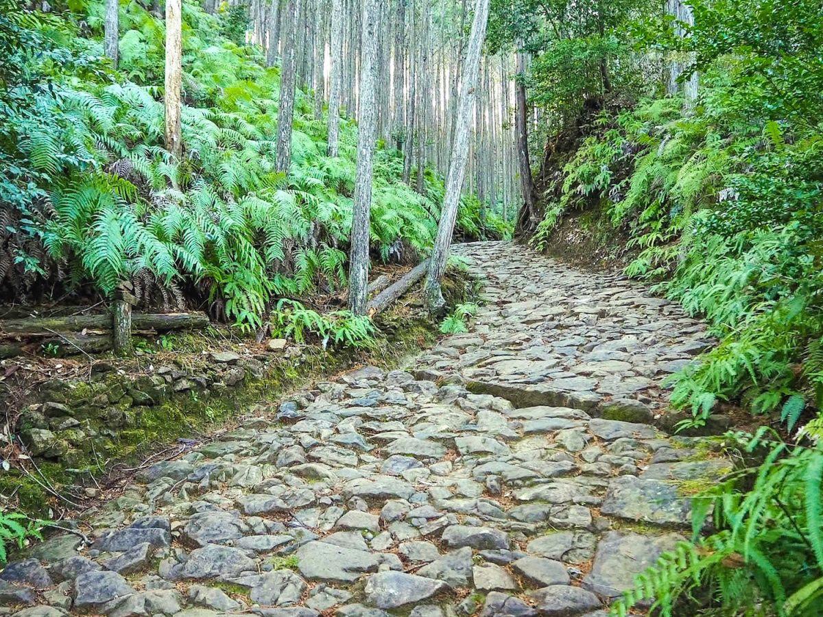 世界遺産「熊野古道」を歩こう! 初心者にもおすすめのコース