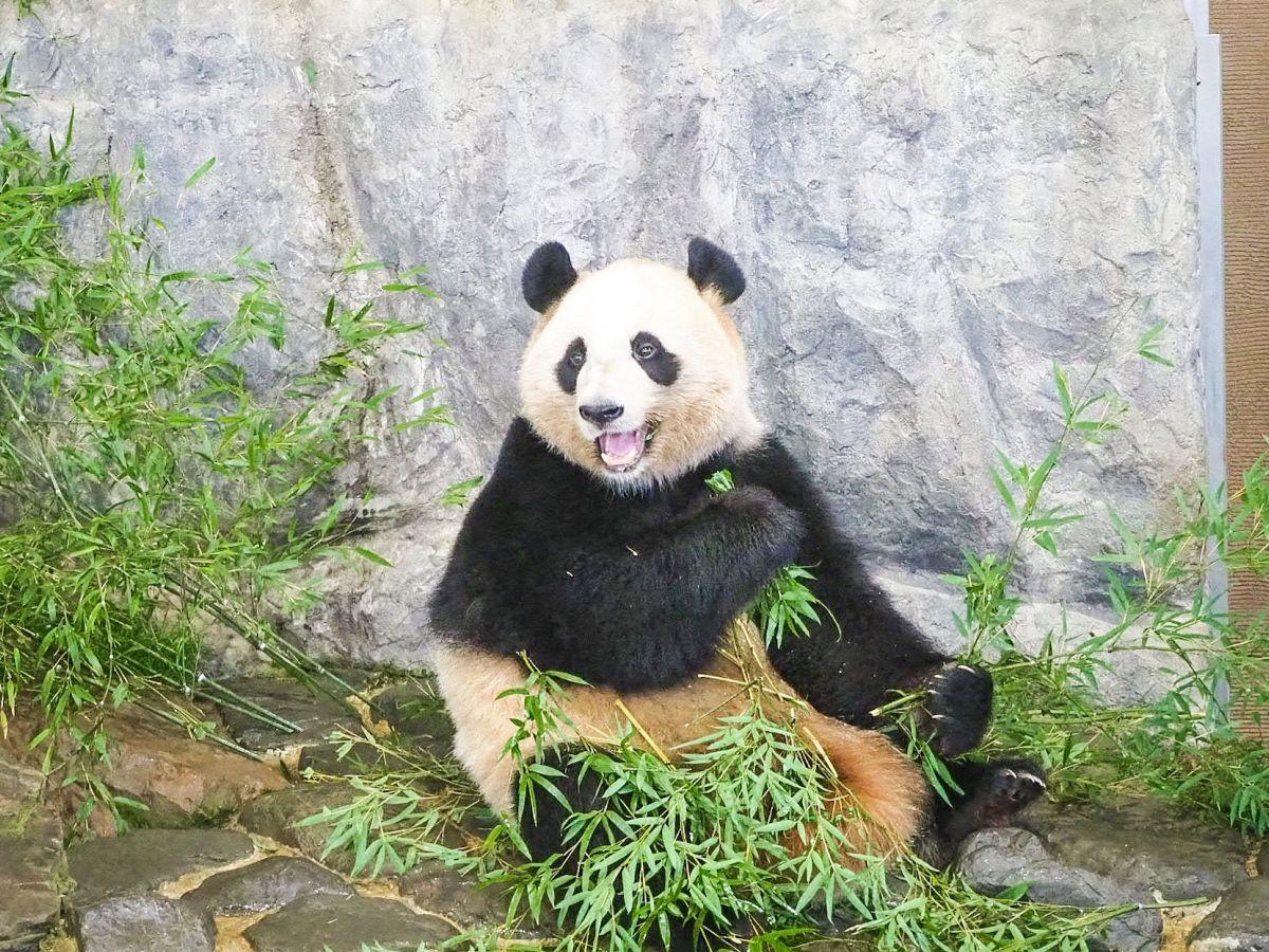 【和歌山】パンダの村に泊まろう! 南紀白浜でパンダづくしの旅
