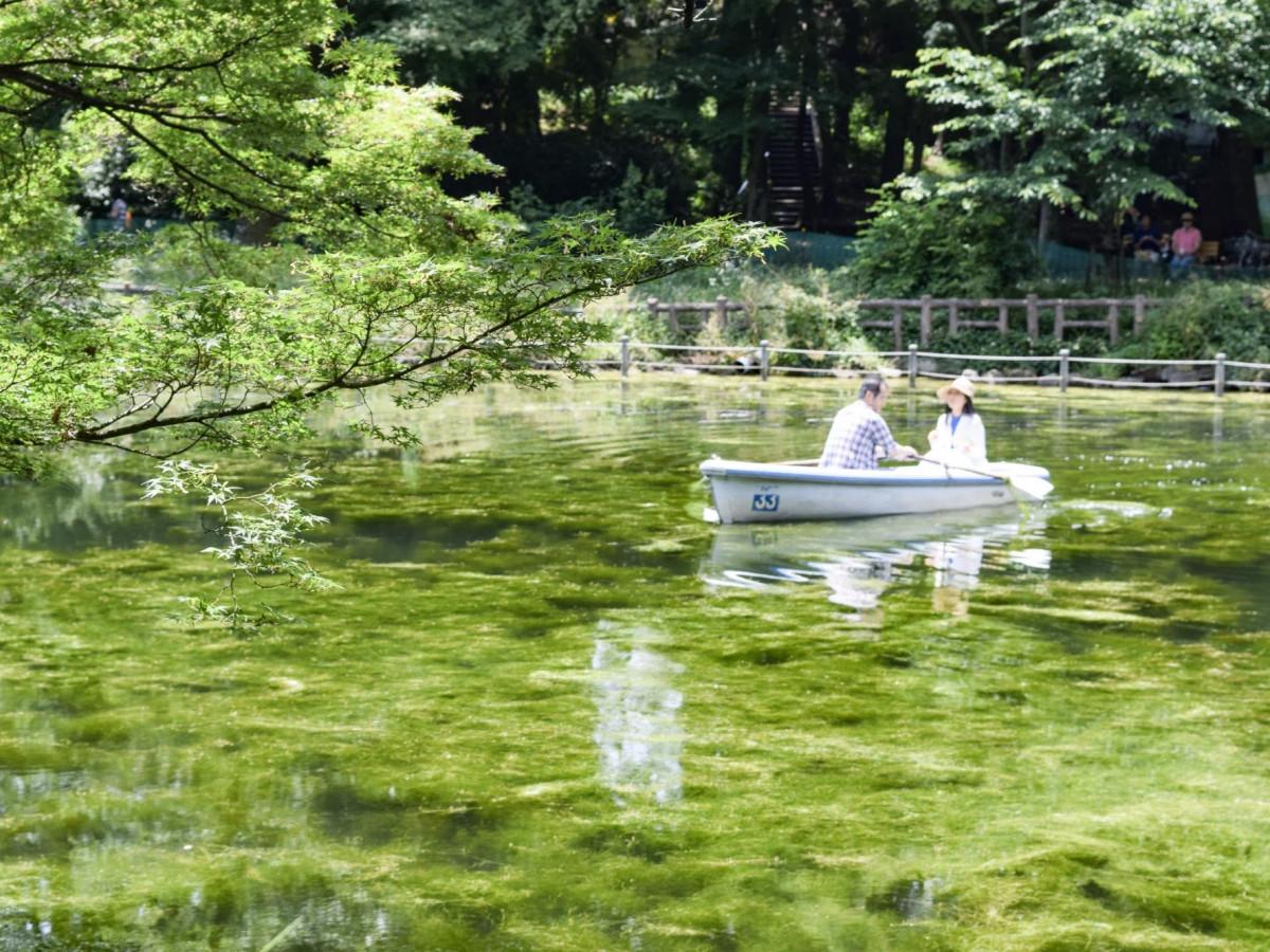 井の頭公園にモネの池が出現!? 生まれ変わった「井の頭池」がモネの名画っぽい