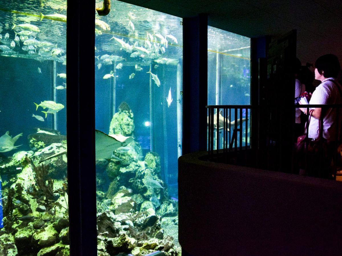 """【静岡】さかなクンも絶賛した""""学べる水族館""""「三保の水族館」"""