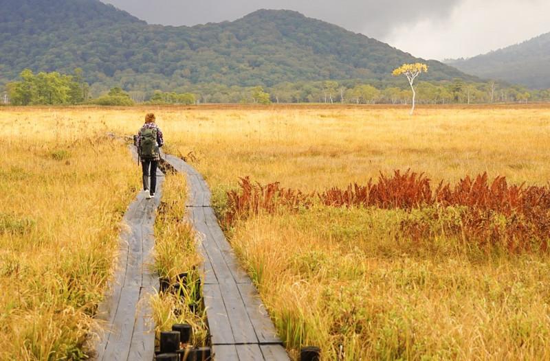 どこまでも続く黄金色の世界! 秋の「尾瀬ヶ原」ハイキング