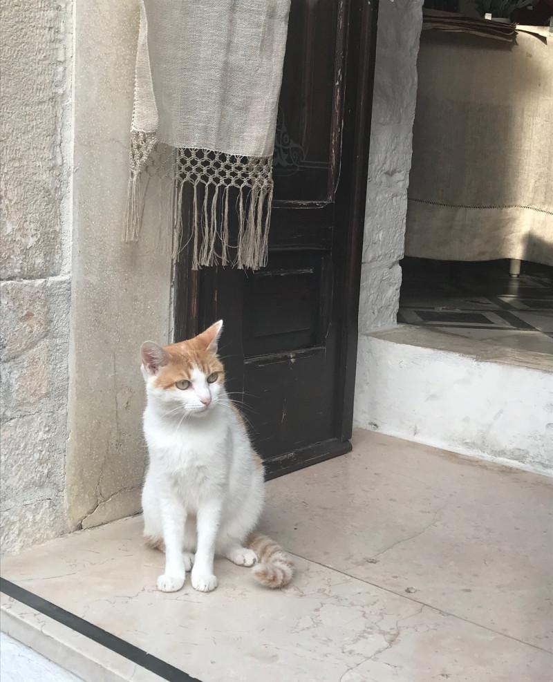 ヨーロッパで出会ったフォトジェニックな猫たち10選(匹)