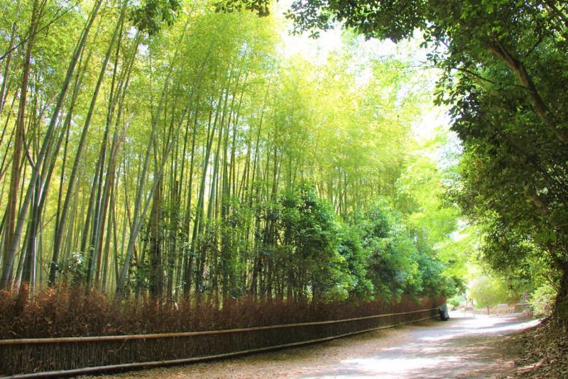 【関西】大阪から日帰り旅行!お出かけスポット&観光コースおすすめ12選