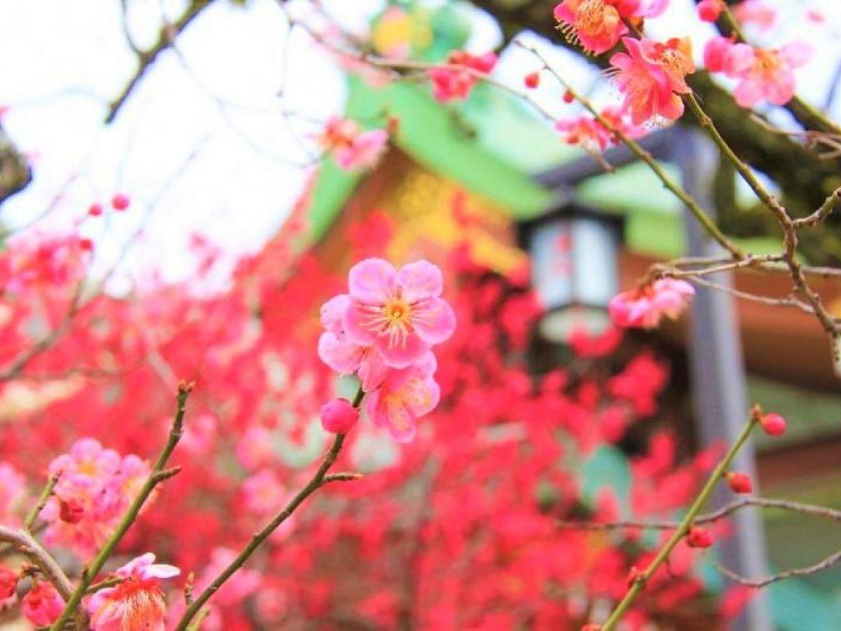 京都・北野天満宮は梅、紅葉名所! アクセス、観光の見どころは? | ガジェット通信 GetNews