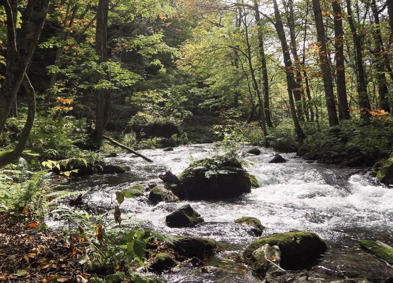 【青森】魅力いっぱい! 秋の「奥入瀬渓流」と周辺のスポット