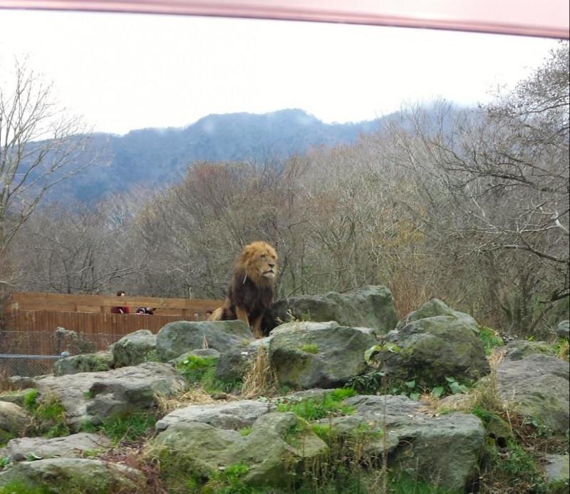 マイカーで動物たちに大接近!「富士サファリパーク」