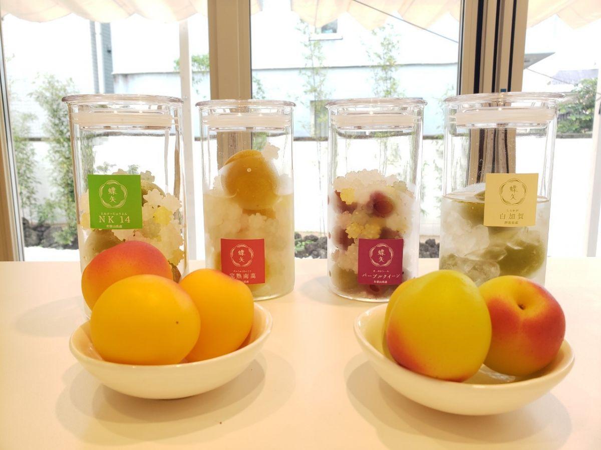 【鎌倉】新スポット「蝶矢」で梅酒・梅シロップ作り体験!