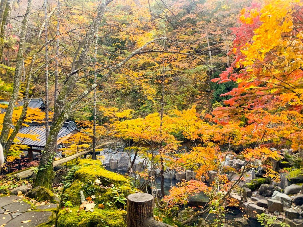 【群馬】大自然に囲まれた露天風呂!「宝川温泉 宝川山荘」で日帰り入浴してきた