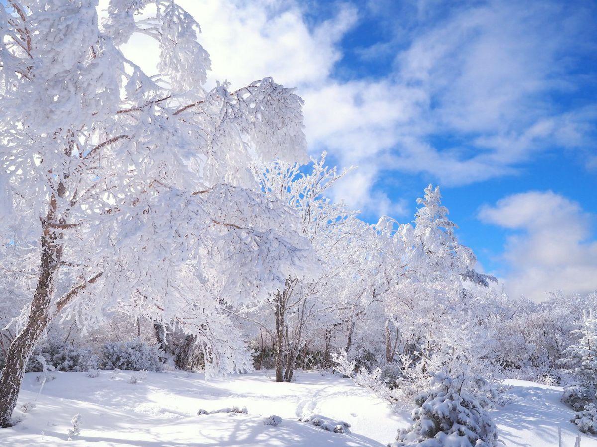 """冬季限定・飛騨高山「位山」天空遊歩道は""""天空の霧氷路""""だった!"""