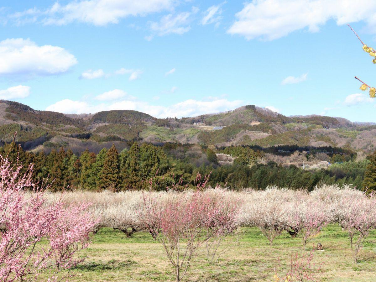 【群馬県】秋間梅林で一足早く春の気配をかんじてみよう!