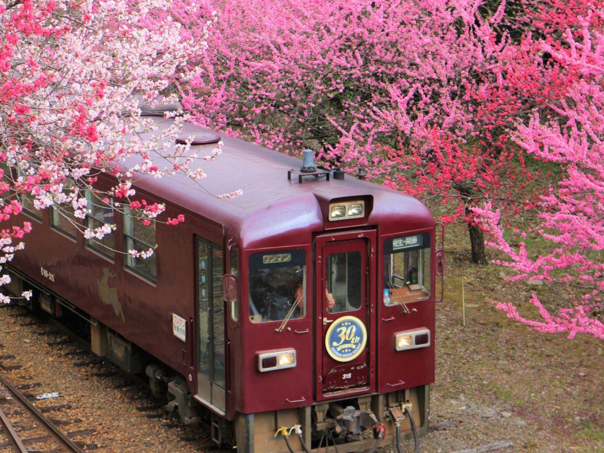 【群馬県】心躍る!春の「わ鐵」花の駅へ