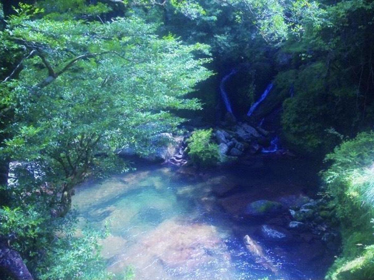 一生に一度は屋久島へ。全てが神秘的な『もののけ姫』の世界!(前編)