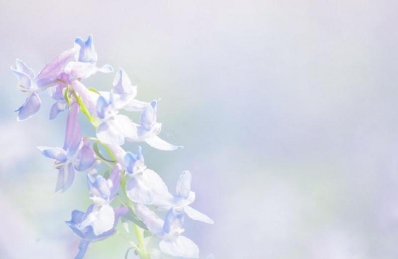 【北海道】見渡す限りのお花畑を見に行こう! 花の絶景7選